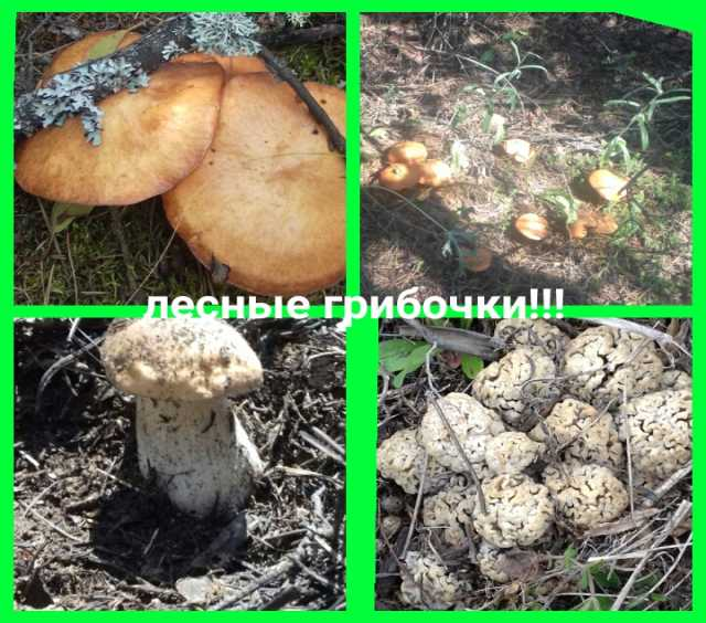 Продам маринованные грибы!