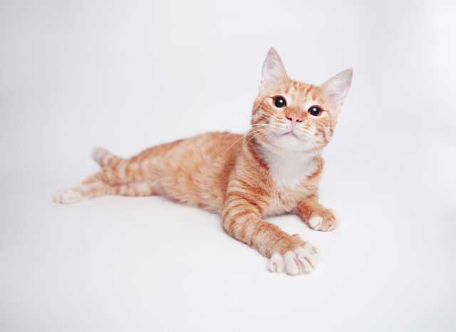Отдам даром Рыжий котенок Гипноз ищет дом.