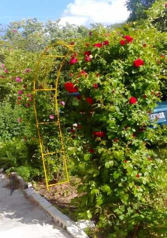 Продам Садовая арка