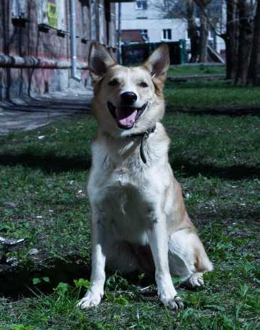 Предложение: Очень жизнерадостная собака!