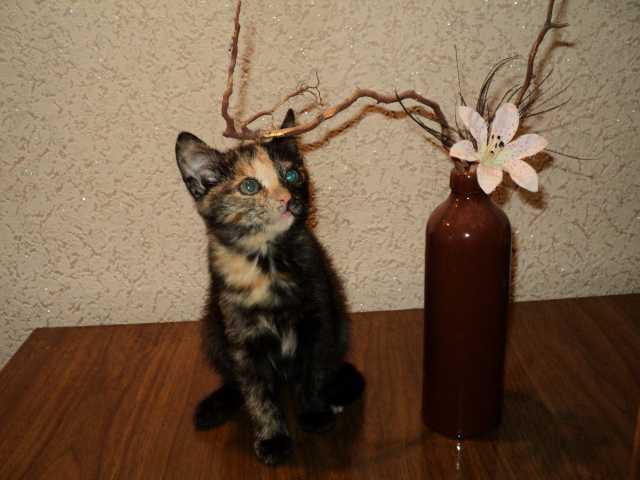 Отдам даром котенка в добрые руки