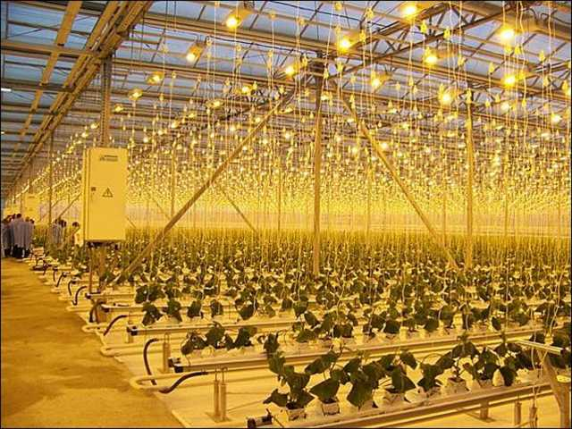 Продам Лампы, светильники для растений