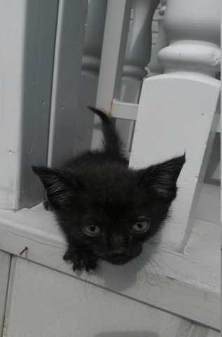 Отдам даром  котенок (мальчик)