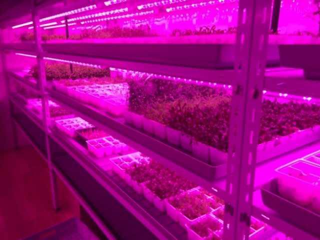 Продам Светильник светодиодный для растений Led
