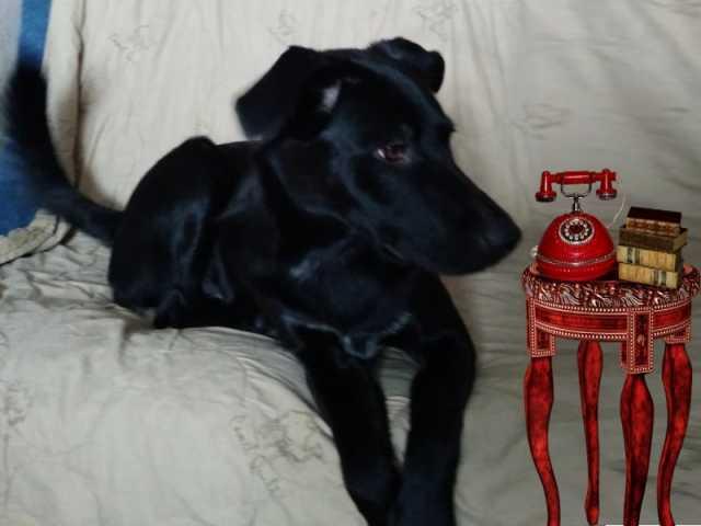 Отдам даром Берта молодая симпатичная собака