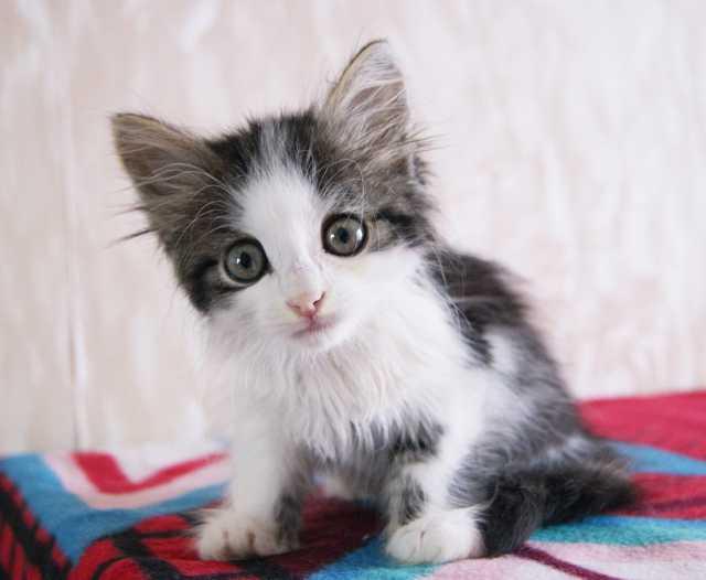 Отдам даром Котёнок Лари- ласковый, спокойный малыш