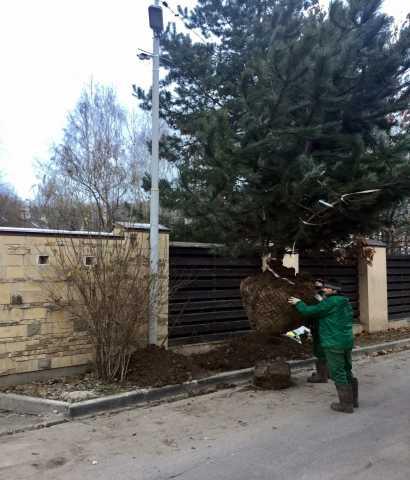 Предложение: Посадка деревьев и кустарников Балашиха