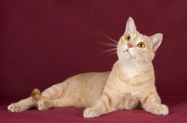Отдам даром В добрые руки молодой котик Персик!