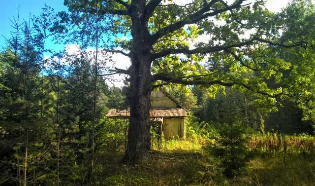 Продам: Шикарный участок на лесной опушке