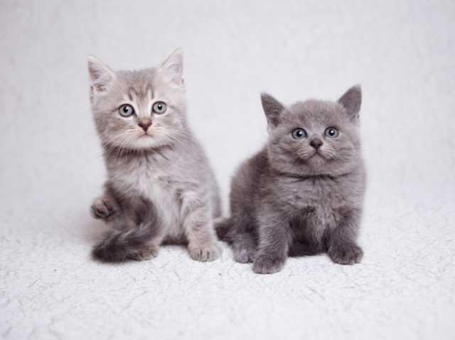 Отдам даром Плюшевые котята в добрые руки