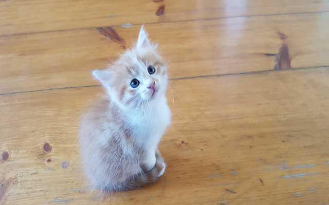 Отдам даром Милый котенок