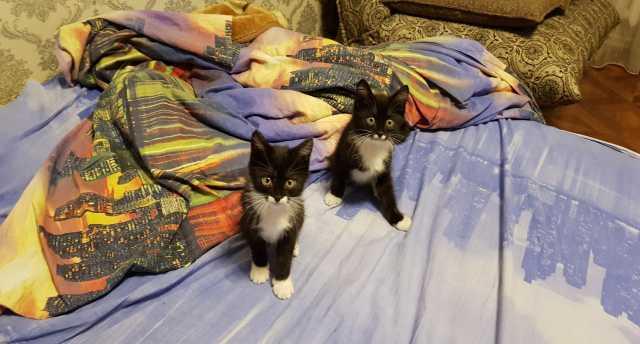 Отдам даром Котята-близнецы!