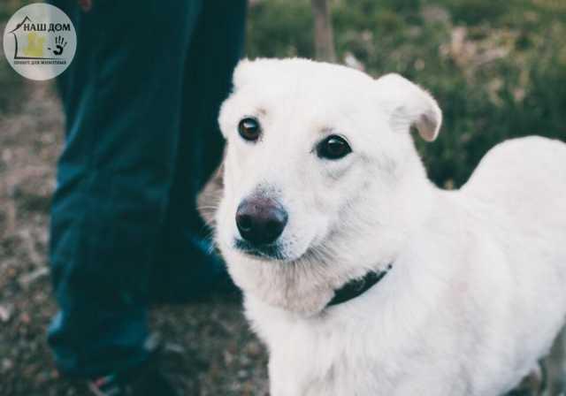 Продам Собака Барби- добрая и доверчивая