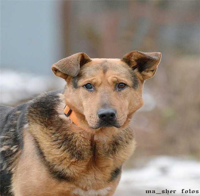 Отдам даром Чудесный  пес Бутч ищет дом.