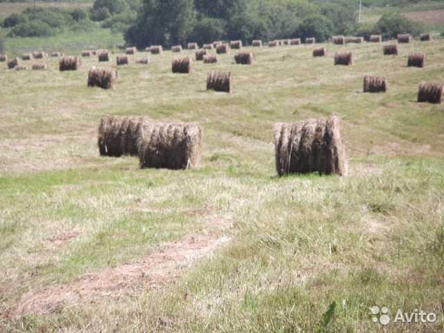 продам сено в рулонах улан удэ 2016