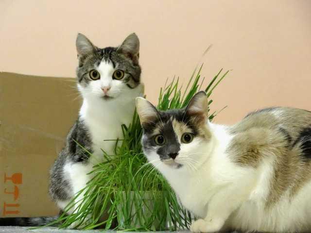 Отдам даром Котик Фаня и кошечка Кика ищут добрых хо