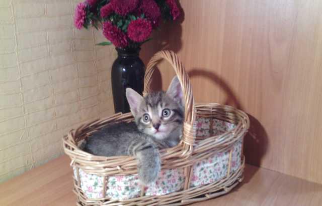 Отдам даром Пятнистый котенок (кот)