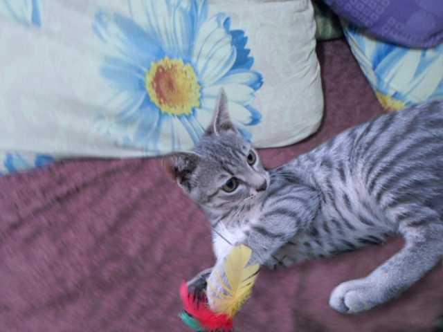 Отдам даром Подарю чудесных котят в добрые руки
