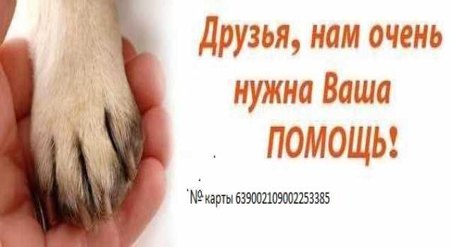 Приму в дар помощь животным