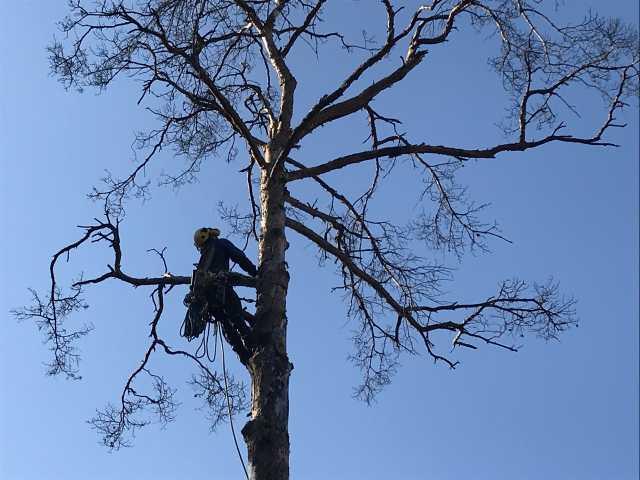 Предложение: Спил деревьев, удаление деревьев