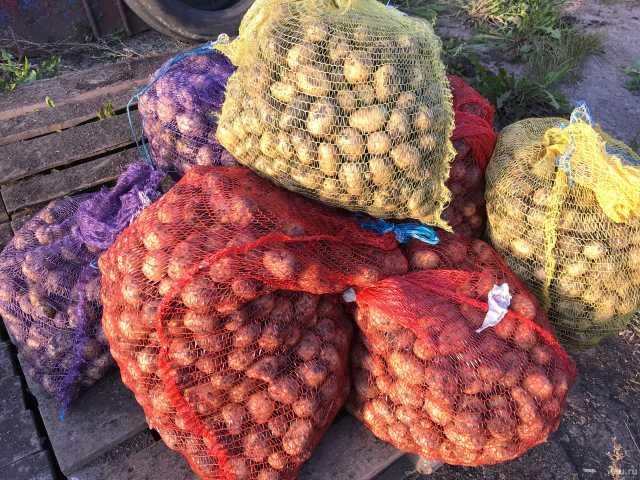 Продам семенной картофель,сорт Адретта