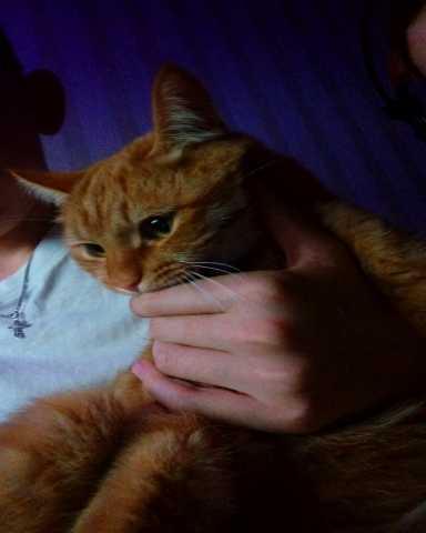 Отдам даром Кот, 1.5 года, кличка: Китти