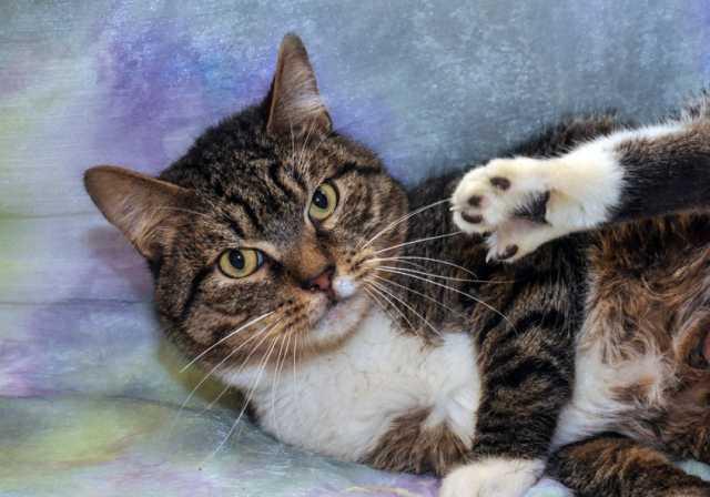 Отдам даром Самый добрый, самый мудрый кот Цезарь. В