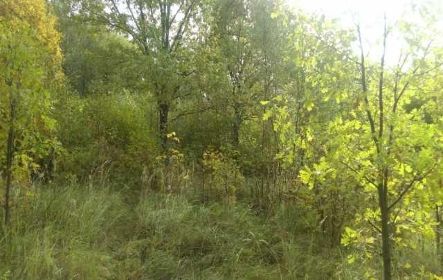 Продам: земельный участок 25 соток Дмитров