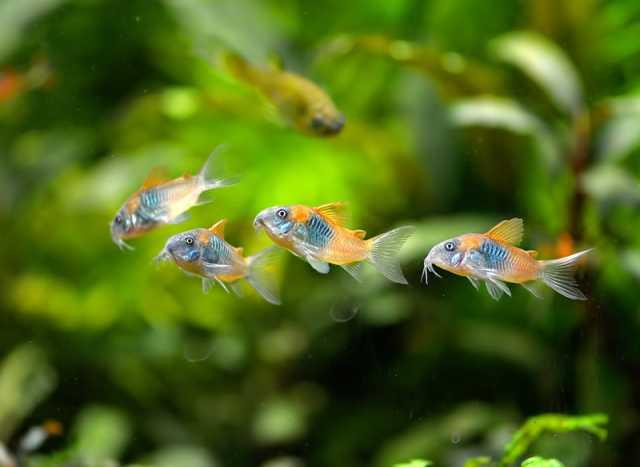 Продам Аквариумные рыбки,улитки,раки,креветки