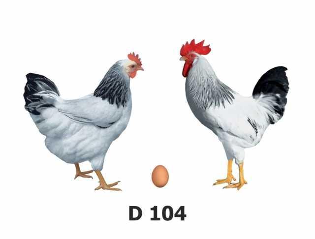 Продам Инкубационное яйцо несушки, бройлера