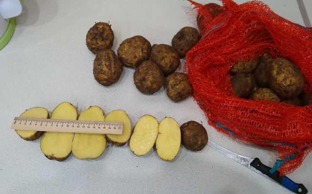 Продам Картофель оптом сорт Лаперла в Саранске