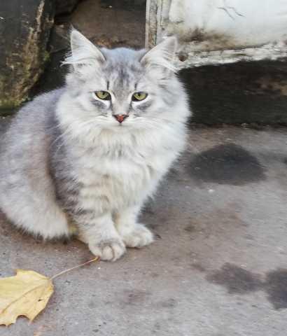 Отдам даром Серенький котик остался один с горем