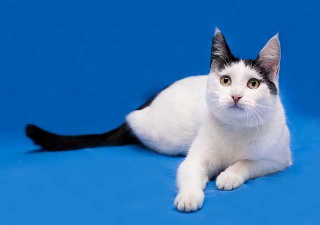 Отдам даром Марсик - молодой котик с изюминкой!