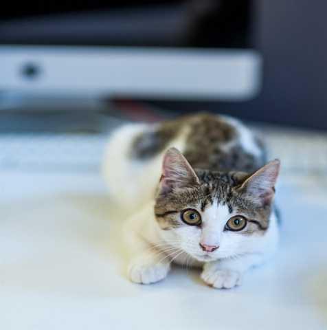Отдам даром Очаровательная кошечка по имени Люси