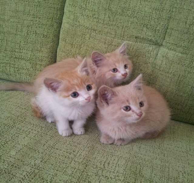 Отдам даром Отдам 4-х котят в добрые руки