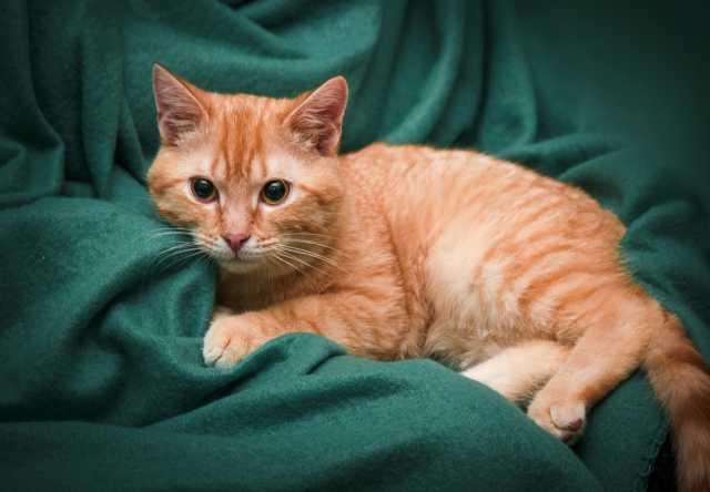 Отдам даром: Молодой рыжий котик ищет дом!
