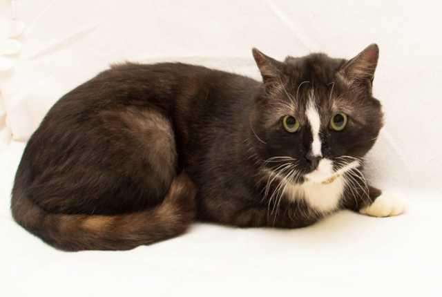 Отдам даром Прекрасный кот Лаврик ищет дом!