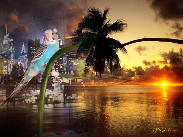 Продам Волнистые попугаи -Домашнего разведения