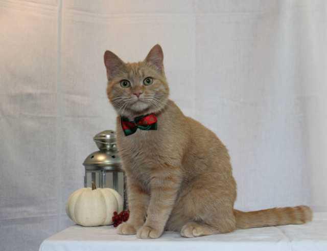 Отдам даром Рыжий котик Филимон ищет семью!