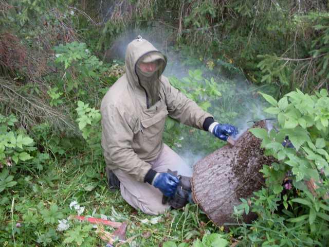 Продам Мёд диких пчёл (бортьевой)