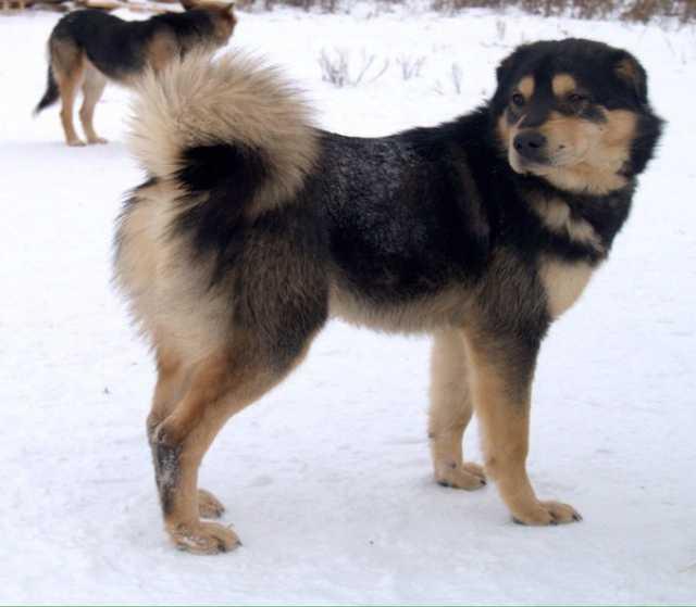 Отдам даром Собака Етти-добрый и преданный друг