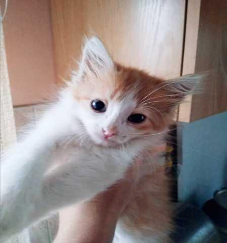 Отдам даром: Котята в дар