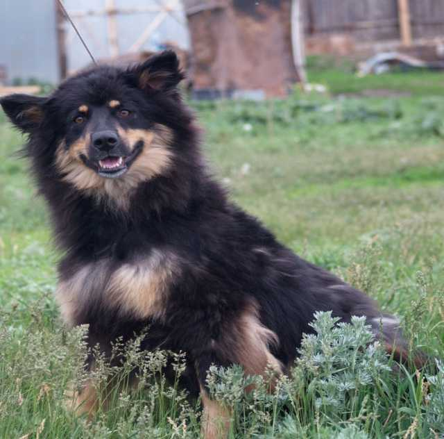 Отдам даром Собака Снеки- молодая красивая девочка
