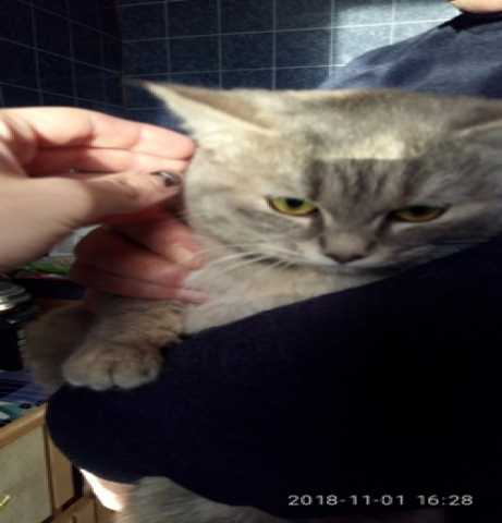 Продам Кошечки и котики