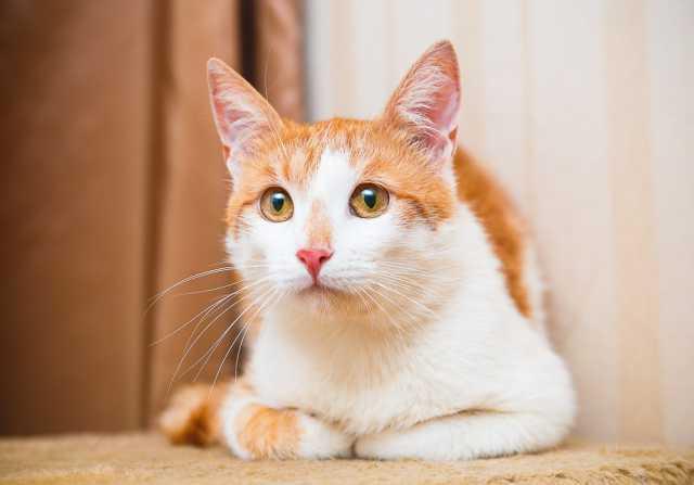 Отдам даром Юный котик Атос, благородный красавец. В