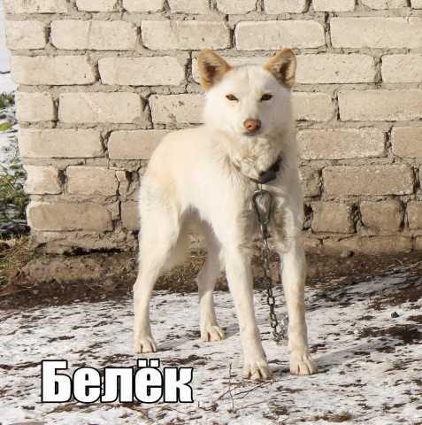 Отдам даром собачку Белька