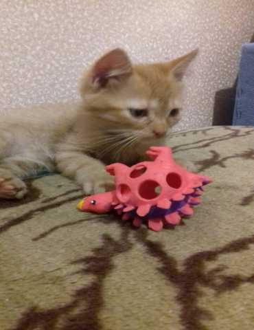 Отдам даром 3 котенка