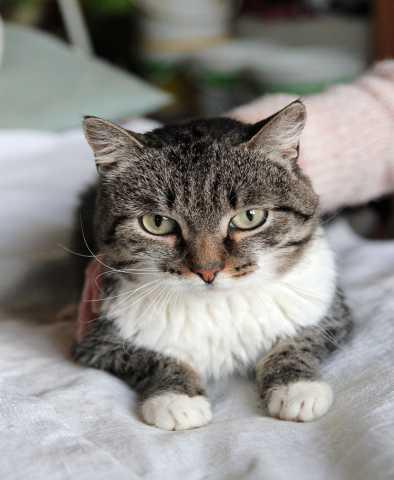 Отдам даром котика Ларса