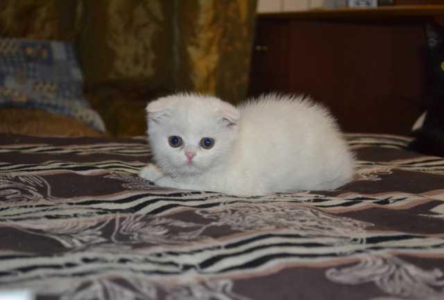 Продам Продам котят