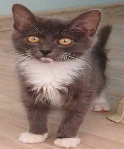 Отдам даром Ласковый, ручной котенок-мурчалка ищет н